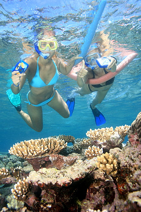Snorkelling at Opal Reef